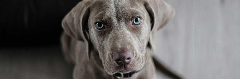 Médailles pour chiens gravure offerte