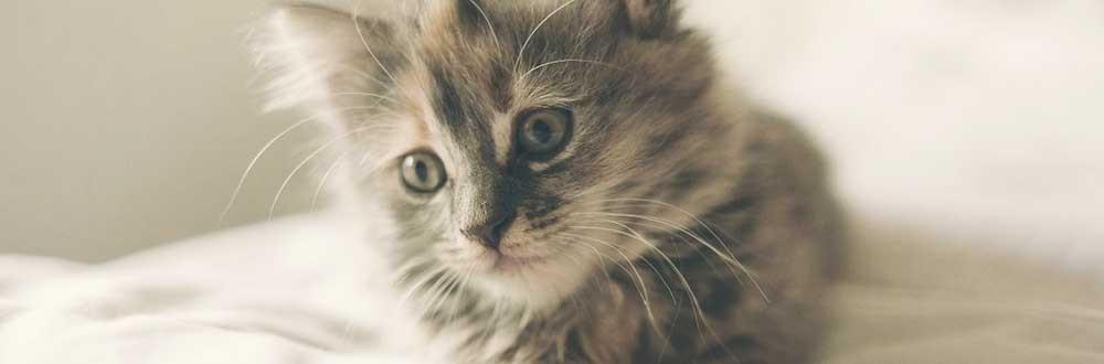 médailles pour chat gravure gratuite